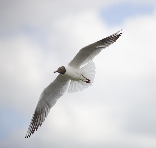 Free, free as a bird by kuipje