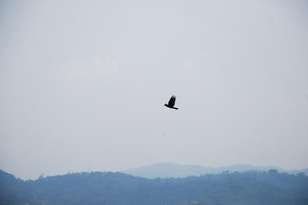 Bird!! by ChocolateT