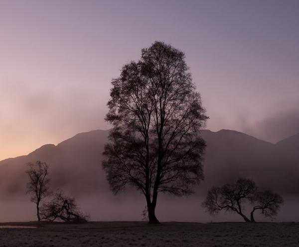 Purple dawn by davidb