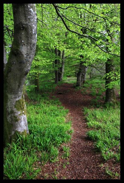 woods by callumcorrie