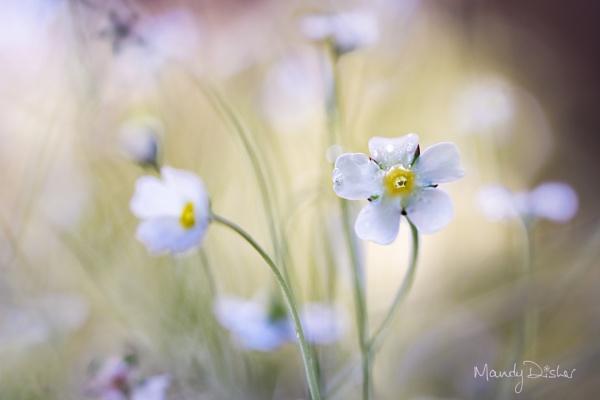 Rock Jasmine by MandyD