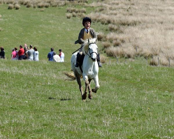 whoa horse by luckybry