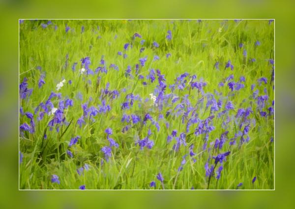 Bluebell Dream by Irishkate