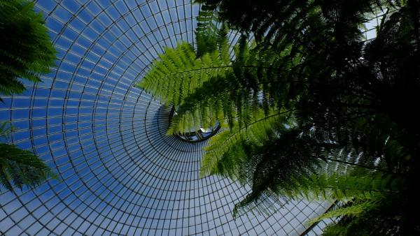 botanic dome by steve486