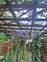 Top Back Garden
