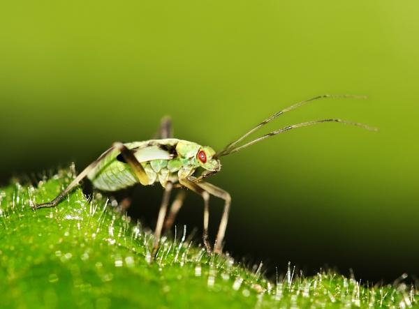 Plant Bug by Metro6R4
