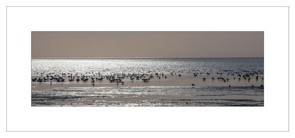 Gulls & Oystercatchers at Dusk by MossyOak