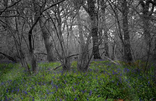 Blue Bell Wood by sluggyboy