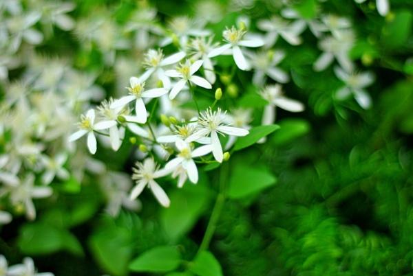 Flower by jamesthalakottur