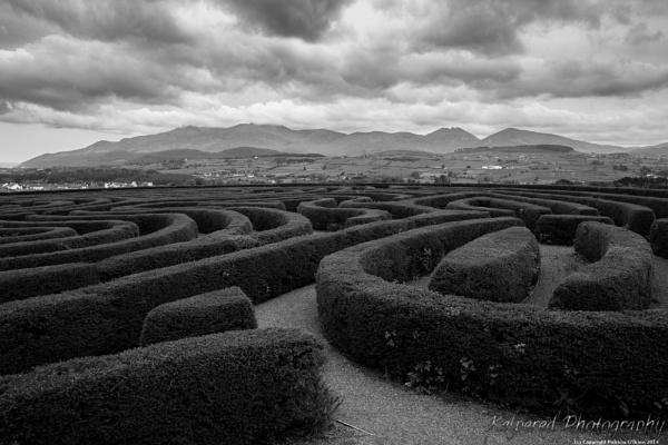 Castlewellan Maze by PMWilliams