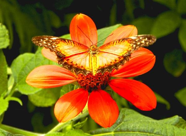 Butterfly world - Teesside