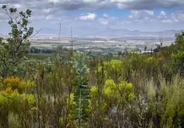 Fynbos view