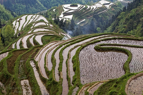 Rice Terrace by gregl