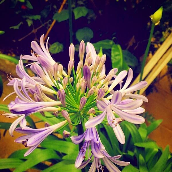 Flower Power by Doglet