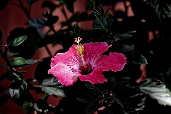 A red flower by wsteffey