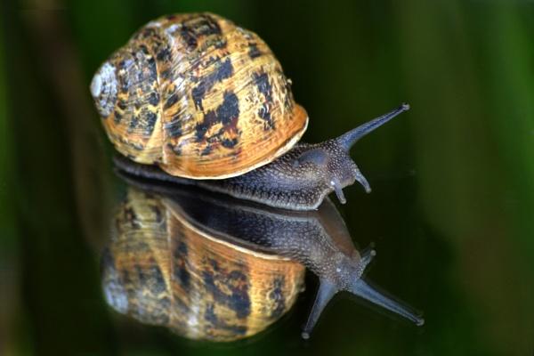 On Slow Reflection by fandebbidozy