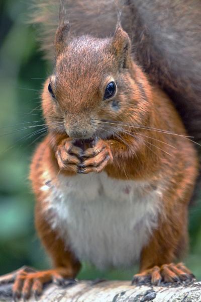 I love my Nuts by SteveMoulding