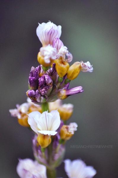 Garden flower by Meganwhitephotography