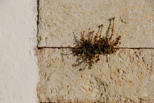 Wall-ing it! by Chinga