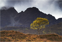 The Wee Tree