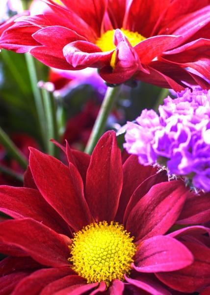Cut Flowers by AdeDavis
