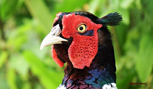 BIRD PULLER by mrcoradour