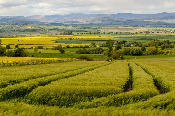 Barley in the wind by billmyl