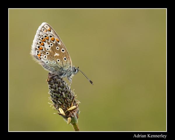 Butterflies 2015 No 24 by tomcat