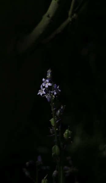Bluebells in the darkness by adamsa