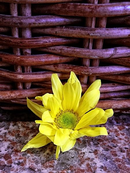 Flower basket by EG