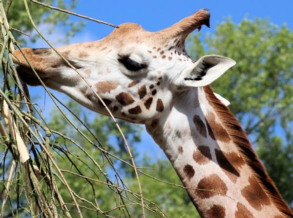 a day at the zoo by john calderbank