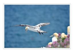 Juvenile take off