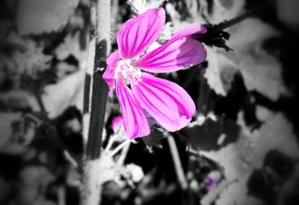 Beauty in the field by steve_i