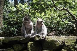 Monkey Business :)