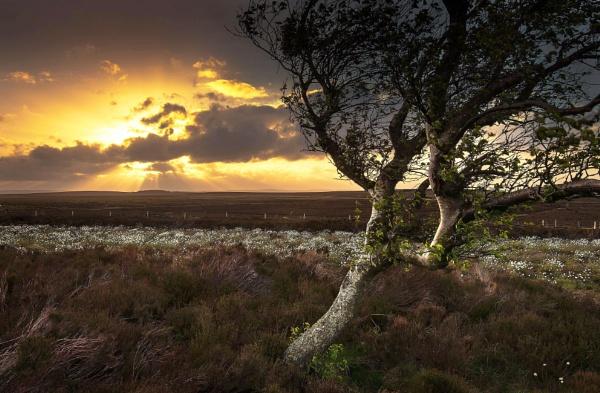 Cotton Grass Sunset by Trevhas