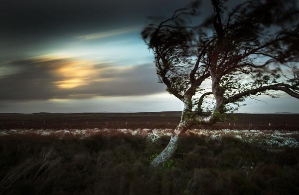 Wind Rush by Trevhas