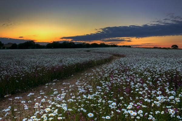 path through wildflowers by DCox