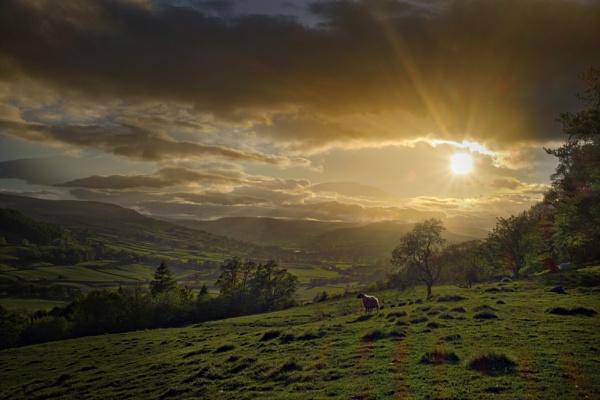 Lone Sheep, Swaledale by stevewlb