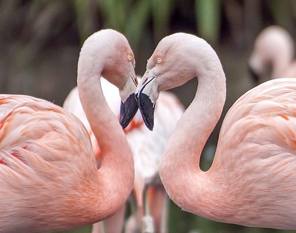 Love Birds by HUFC