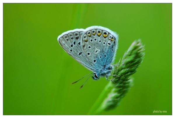 green-blue by Nino812