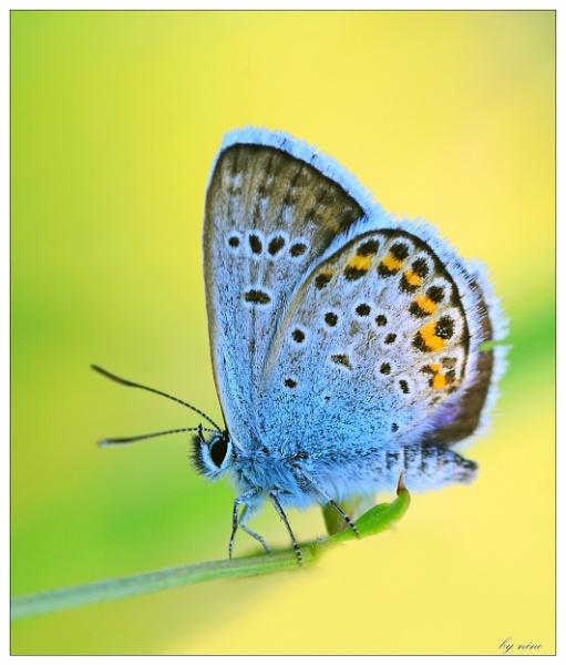 yello-blue by Nino812
