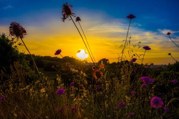 Sunset on the scrub by Redline748