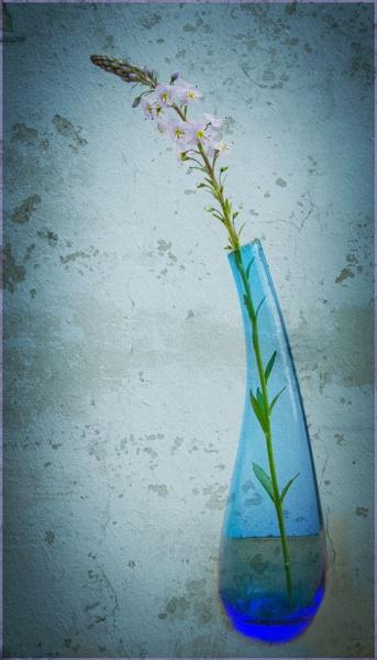 Blue Mood. by myrab