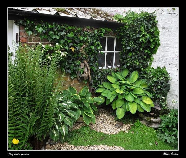 Tiny hosta garden by oldgreyheron