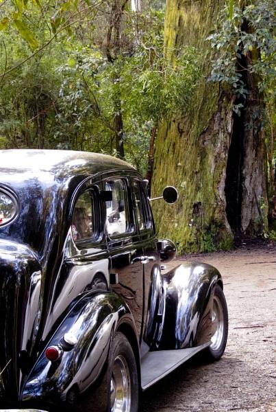 Classic Car at Badgers Creek by Elfix6