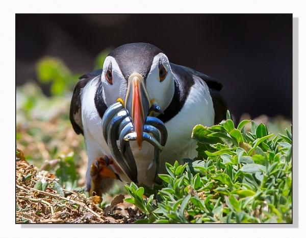 A Beak-full by mjparmy