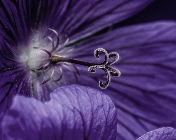Purple flower by bart26