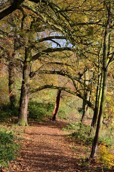 woodland in autumn , Nostel Priory Woods by Deiqkier