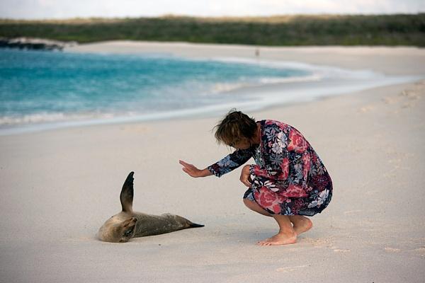 Galapagos Greeting by stevie