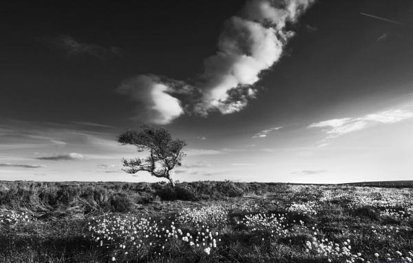 Sky High by Trevhas